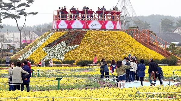 충남 서해안의 대표 관광지 태안에서 꽃 축제가 잇따라 열려 상춘객들의 발길을 유혹하고 있다. (태안군 제공)