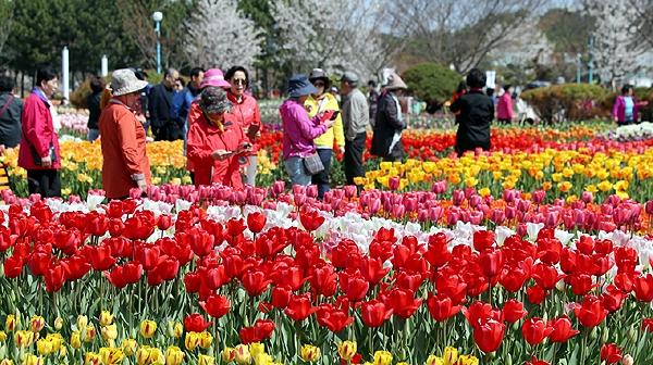 안면읍 코리아플라워파크에서는 13일부터 5월 12일까지 '봄의 화원, 추억을 이야기하다'를 주제로 세계튵립축제가 열리고 있다. (태안군 제공)